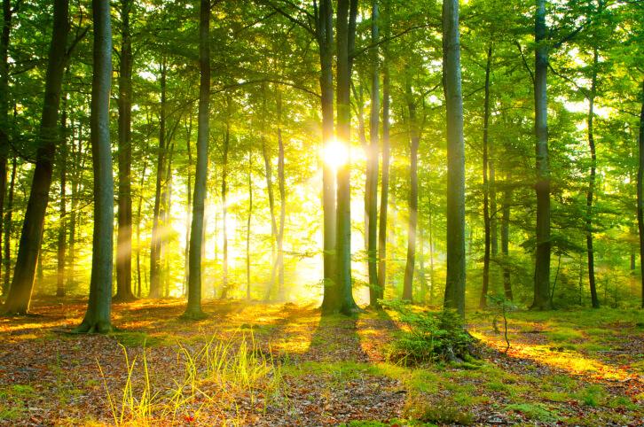 sole-fra-gli-alberi